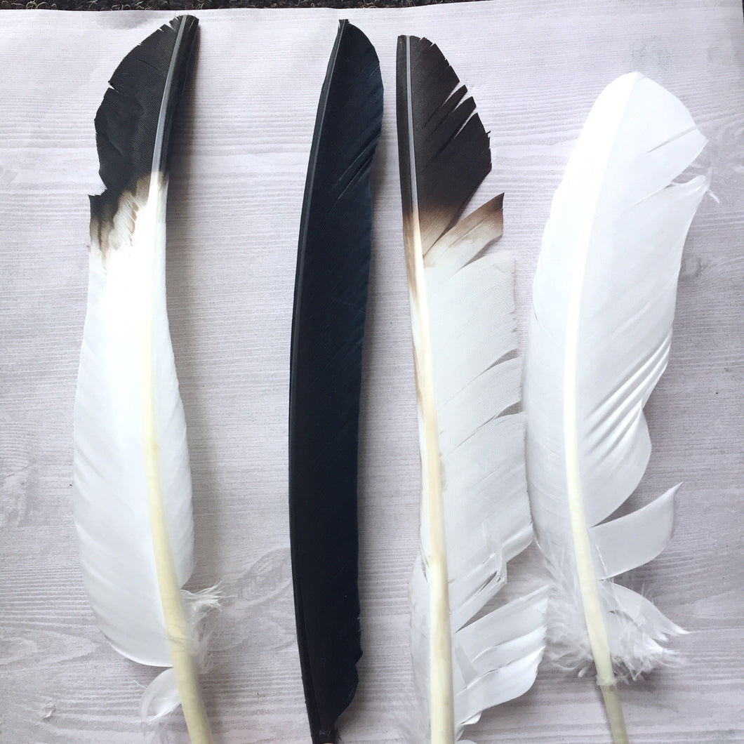 Feather for Smudging - Accessory - Cosmic Corner Savannah