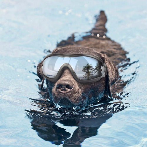 Dog Protection Goggles