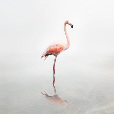 For Now Flamingo - Lustre.art
