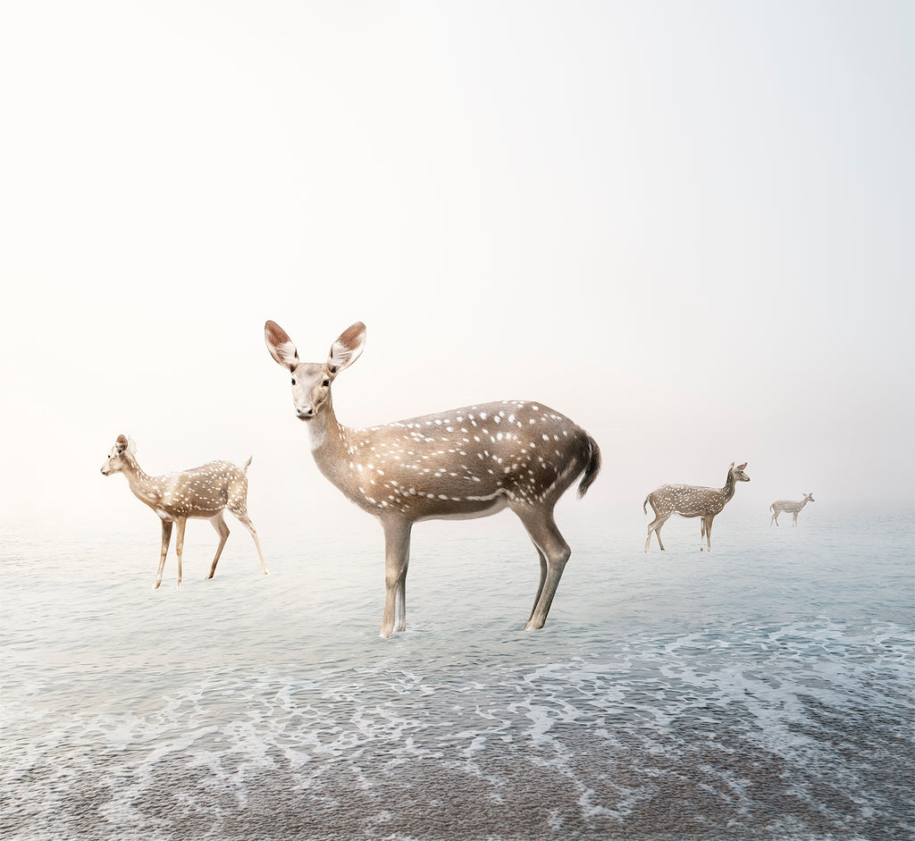 Stay My Deer - Lustre.art