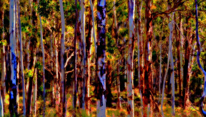 'Bush Poles' - Digital Art