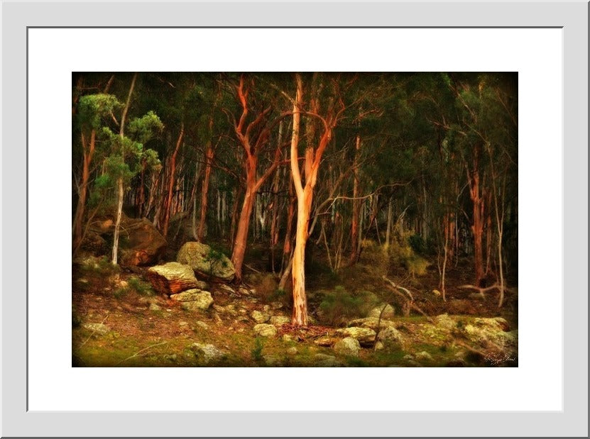 Enchanted Forest - Landscapes