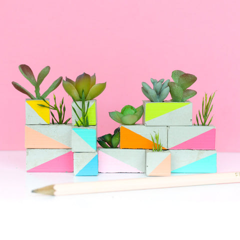 Mini Succulent Garden for your Office or Desk - Fun Gift