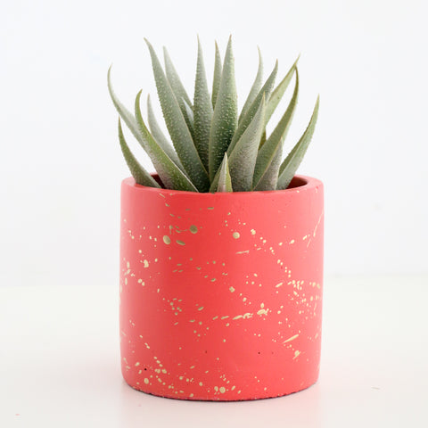 Large Gold Splatter Cement Planter