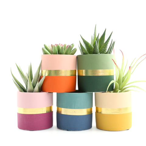 Small Color Blocked Cement Planter - Fall Colors