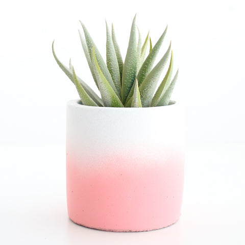 Ombre Cement Planter