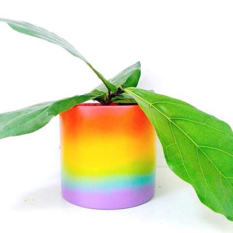 Rainbow Gradient Cement Planter
