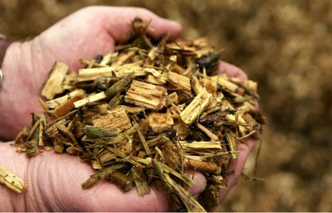 Biomass Energy: Learn About the Pros and Cons