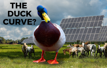 The Duck Curve - How is it a Hindrance for the Solar Market?