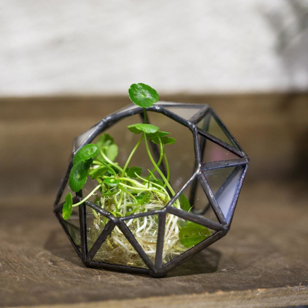 Eight Surfaces Diamond Glass-Geometric Terrarium