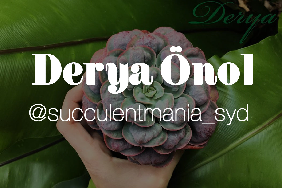 Five Minutes With Derya Önol