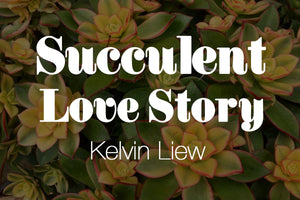 Five Minutes With Succulent Love Story