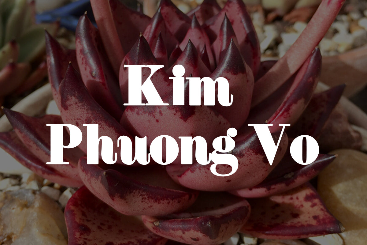 Five minutes with Kim Phuong Vo