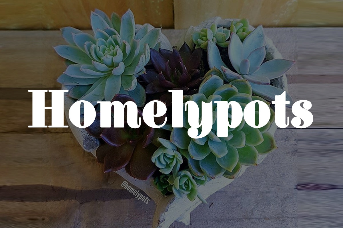 Five Minutes with Homelypots