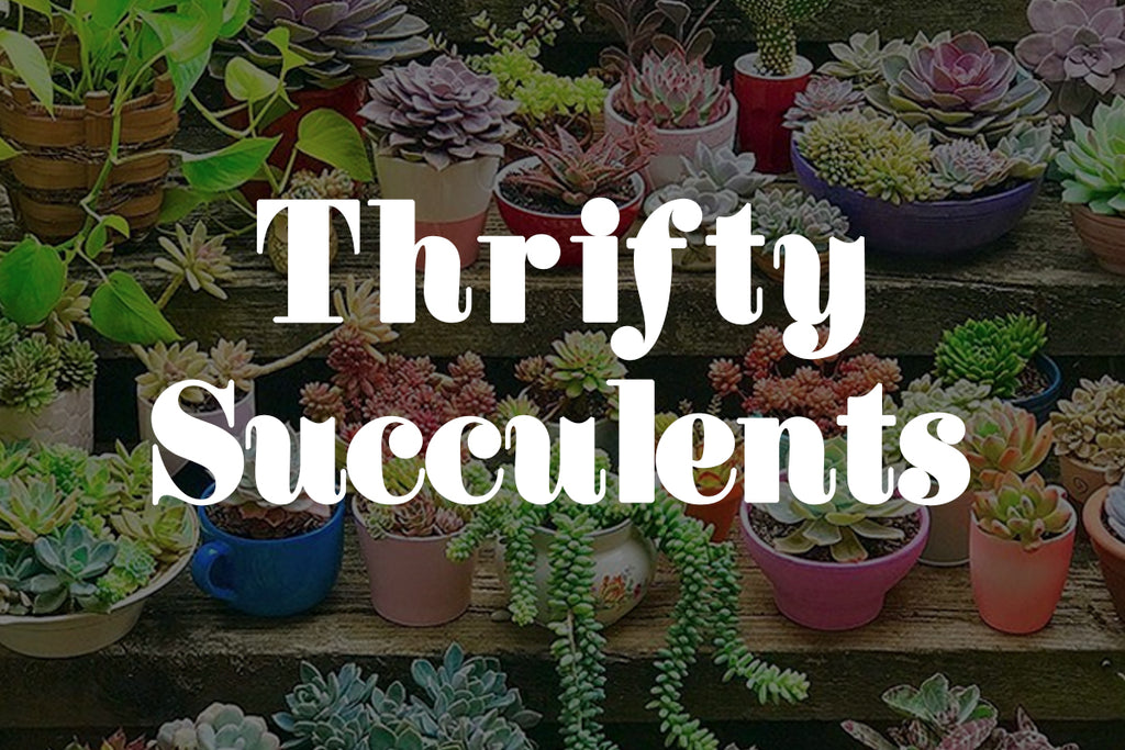 Five Minutes With Thrifty Succulents