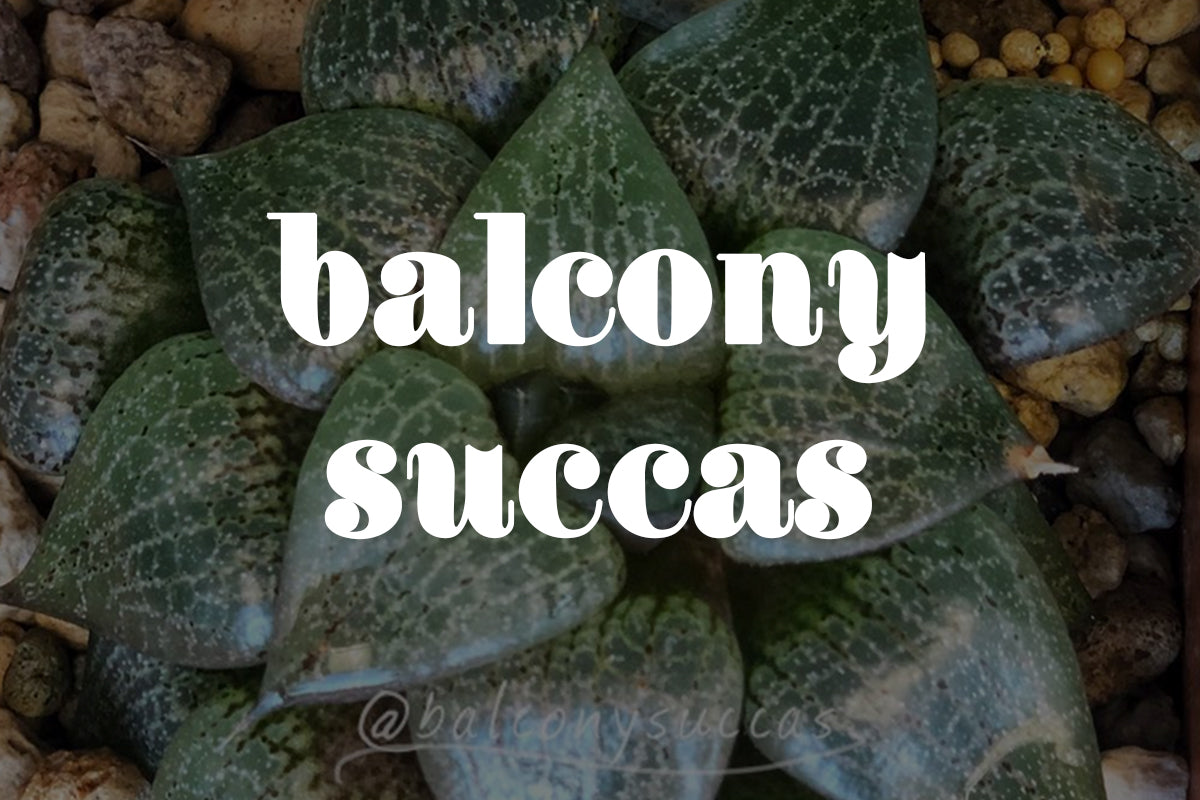 Five Minutes With Balcony Succas