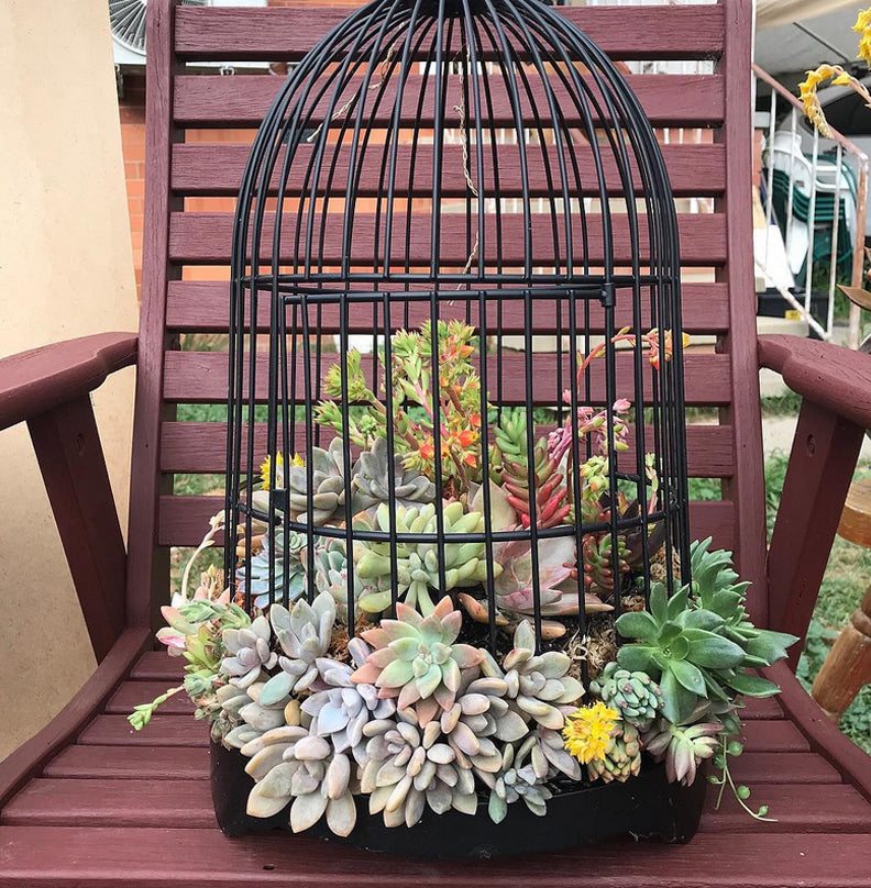 The Dainty Garden Succulents in a Bird Cage by Beth