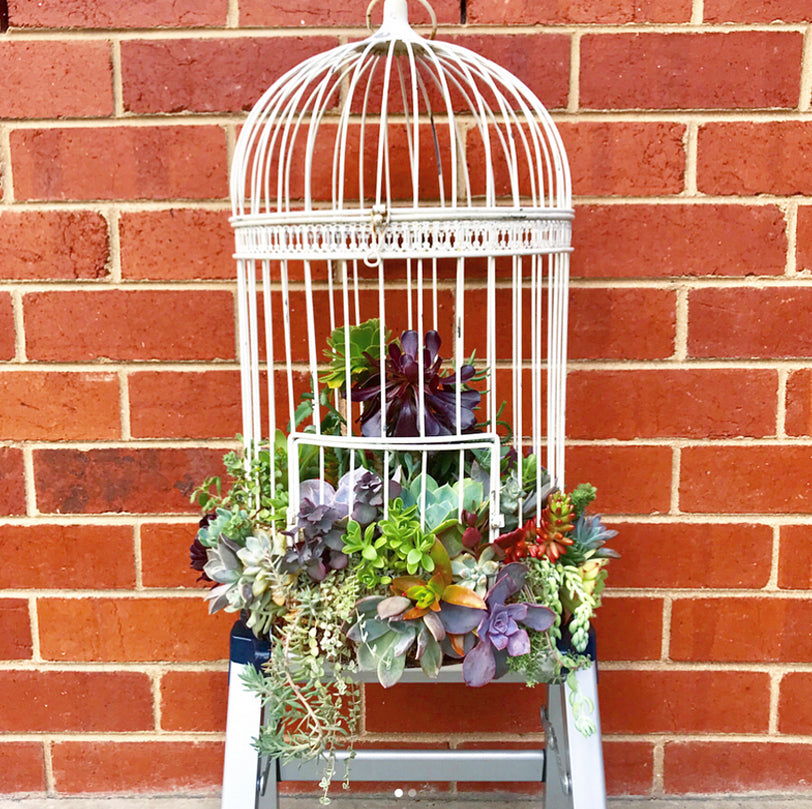 The Dainty Garden Succulents in a Bird Cage
