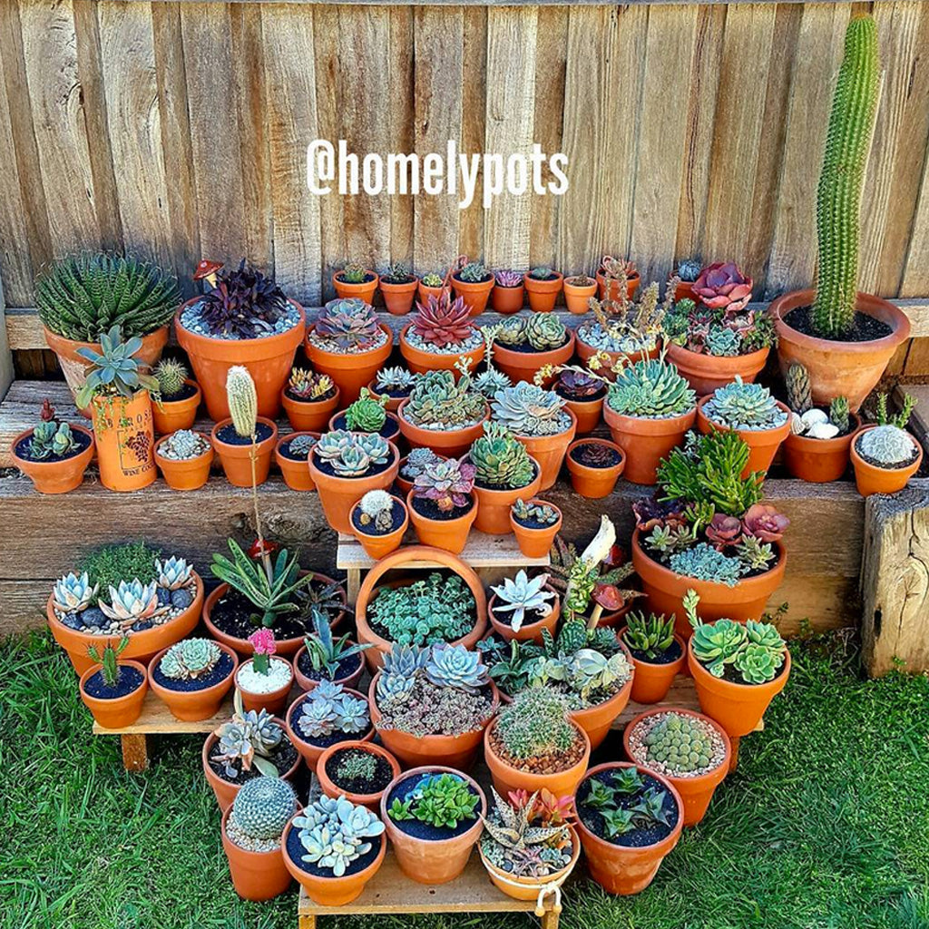 Homelypots succulent collection