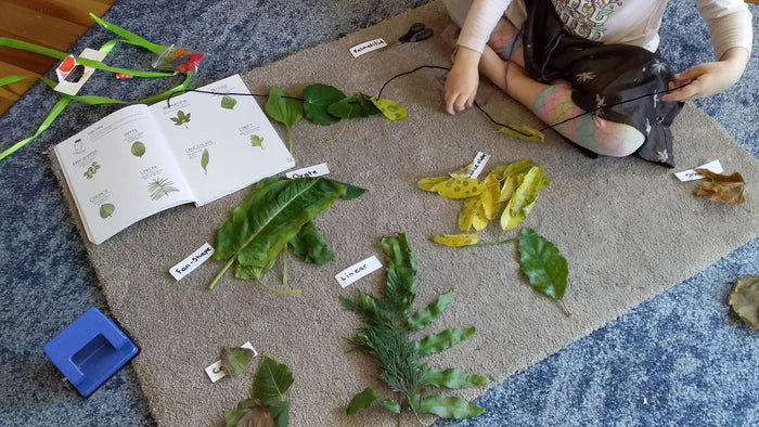 How A Walk In The Park Helped My Learners with Botany