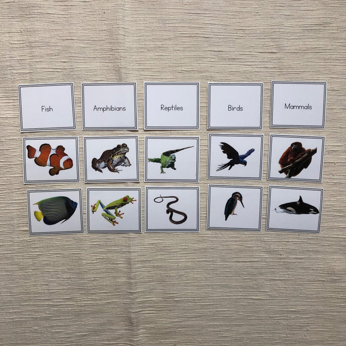 Vertebrate Sorting Activity - montessorikiwi