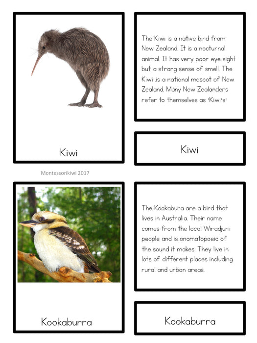 Oceania animals - montessorikiwi
