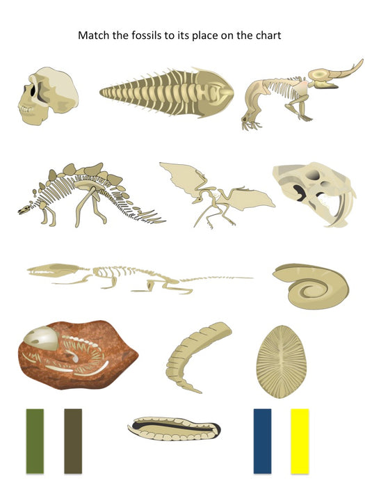 Fossils of Different Eras - montessorikiwi