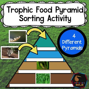 Trophic Pyramid: herbivores, omnivores and carnivores - montessorikiwi