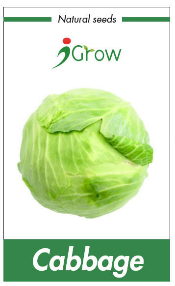Naturally Treated Organic Cabbage (50 Seeds)