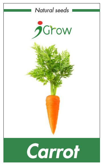 Naturally Treated Organic Carrots Carrots (100 Seeds)