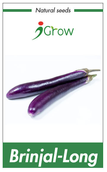 Naturally Treated Organic Brinjal Purple Long Seeds 500 seeds