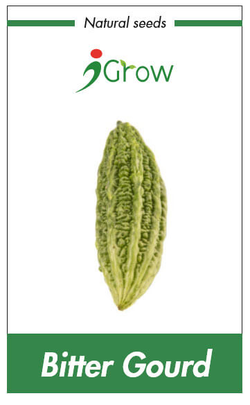 Naturally Treated Organic Bitter Gourd Seeds (200 seeds)