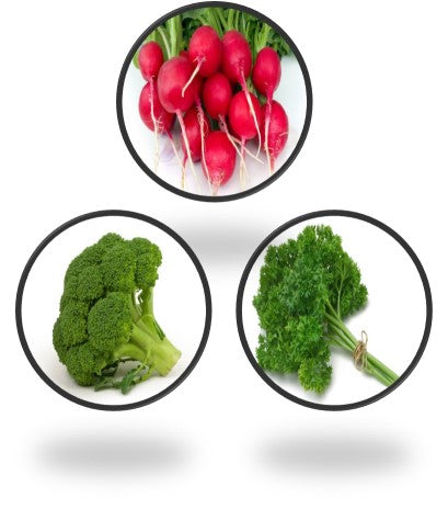 Exotic Vegetables Seeds Combo Set of 3 Pack