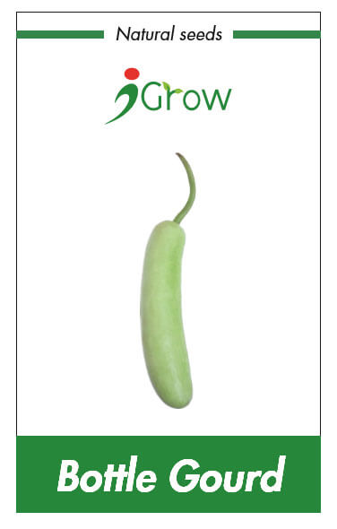 Naturally Treated Organic Bottle Gourd Seeds (50 seeds)