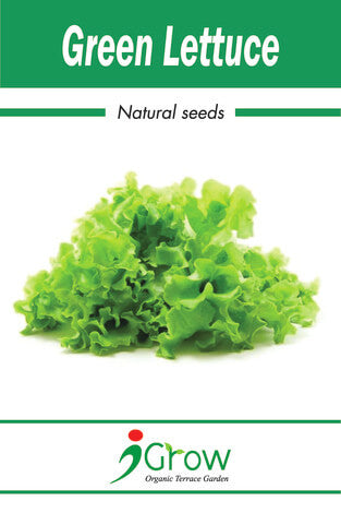 Naturally Treated Organic Green Lettuce Seeds 50SEEDS