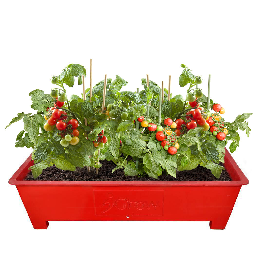 Terrace Garden FRP Planter Box  -  Red     (3 Ft X 2 Ft)