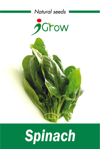 Naturally Treated Organic Spinach 1000 Seeds