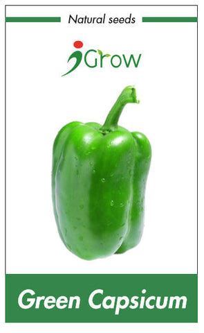 Natural Seeds - Green Capsicum Seeds