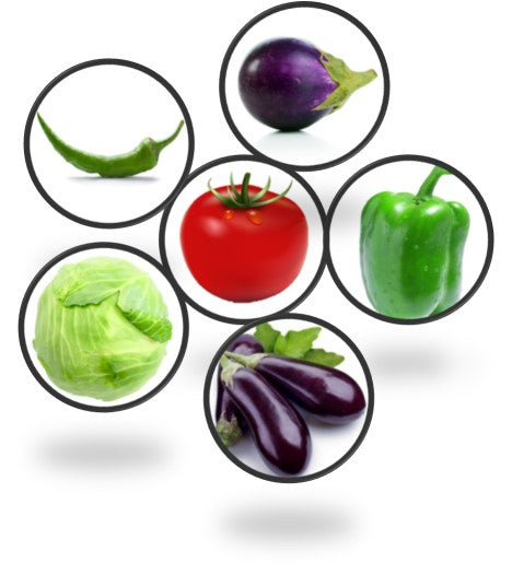 Surface Vegetables Seeds Combo Set of 6 Pack