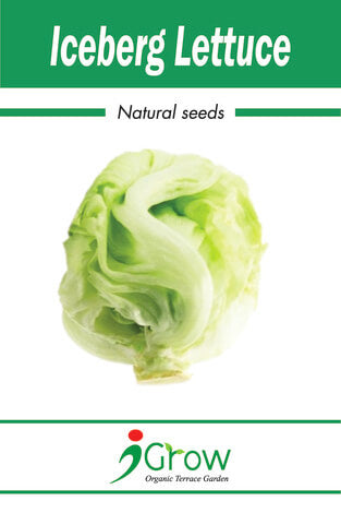 Naturally Treated Organic Iceberg Lettuce Seeds 125 SEEDS