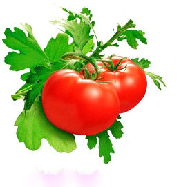 Naturally Treated Organic Tomato 50 Seeds