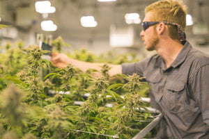 California Pot Farm Tours