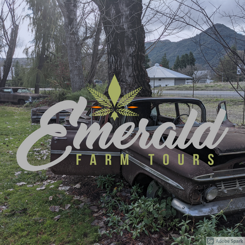 Road Trip: Mendocino County Cannabis Trail (Full Day Tour)