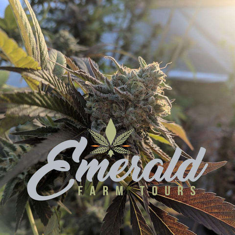 Emerald Farm Tours Gift Cards