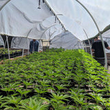 Emerald Farm Tours guests on our signature Seed-to-Sale Tour™