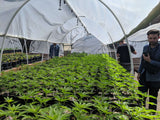 Seed-to-Sale Tour™ (Cannabis Farm & Industry Tour) - Emerald Farm Tours