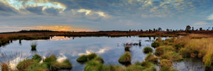 Panorama of carbon offsetting wetlands