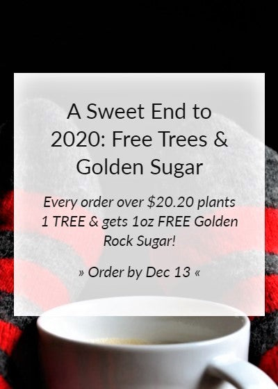 A Sweet End to 2020 - Black Friday Promo