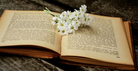 Chamomile Flowers on a book