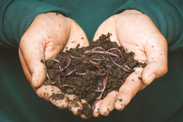 Holding a pile of dirt wriggling with worms